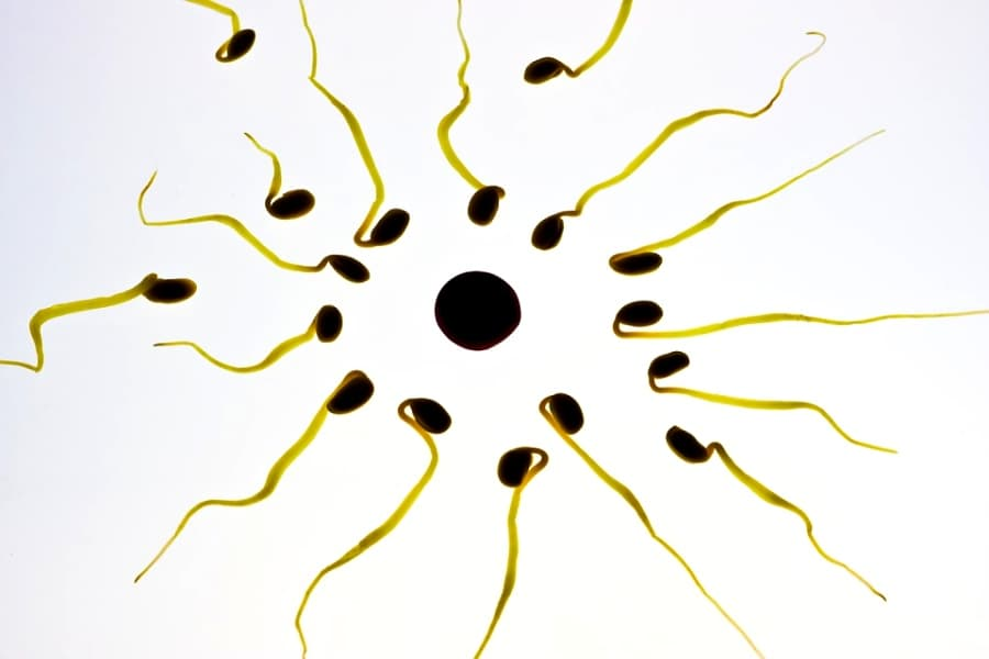 vitrificacion de ovulos, congelación de óvulos, preservación de óvulos